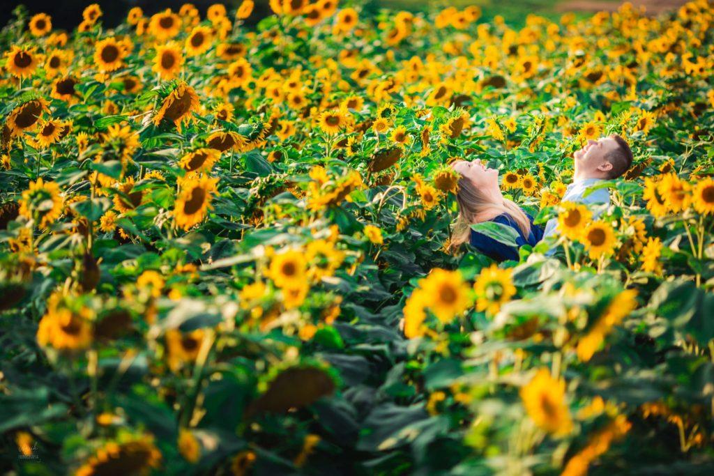 pole słoneczników lubelskie